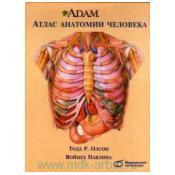 A.D.A.M.Атлас анатомии человека. пер. с англ.  2-е изд.