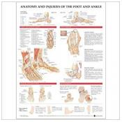 Anatomy and Injuries of the Foot and Ankle Anatomical Chart (paper)