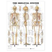 Skeletal System Anatomical Chart (paper)